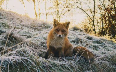 Are You Being Foxed By An Ox…alate Result?